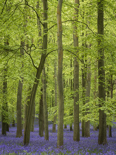 Dockey Wood 2015