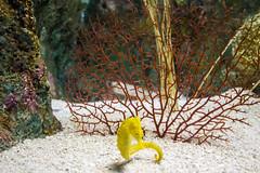 IMG_0005 (Samihan Patel) Tags: blue moon flower zoo monkey jellyfish seahorse turtle snake houston flamingos frog crocodile elephants sealion dory htx