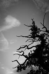 Dickens Heath Walk (Alex Matravers) Tags: dickens heath solihull sony s7 amateur canon 50mm fd wide landscape greenary countryside grey greyscale mono black white sky silhouette trees wood branch