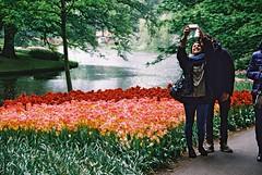 000018 (seustace2003) Tags: keukenhof nederland niederlande holland pays bas paesi bassi an sitr tulip tulp tulipan tiilip tulipa