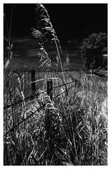 Gloom and Doom (Heinz9577961) Tags: summilux50mmf14 leicam2 rolleiinfred400 blackchromeedition blackdiamond blackandwhite bw infraredfilm selfdevelop rodinal12520c730elmar 35mm f351937 elmar f35 frames border
