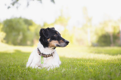 Leo (alessandrafavetto) Tags: dog pet pets color green dogs grass horizontal outdoor dogphotography petphotography dogportrait petphotographer dogphotographer