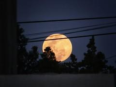 Asomando (Mariano Montes | HDsuperbikeVideos) Tags: moon argentina atardecer photography nikon flickr photographie luna fullmoon fotografia lunallena crdoba anochecer bluemoon crdobaargentina nikonargentina supermoon