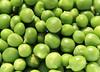 13-IMG_3376 (hemingwayfoto) Tags: ackerbau biologisch erbse frisch geöffnet gemüse grün hülsenfrucht landwirtschaft lebensmittel markt nahrung nahrungsmittel natur pflanzen pflanzlich produkt roh süs vegetarisch