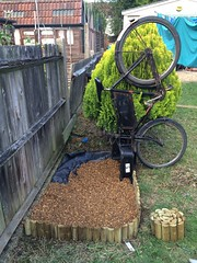 Pashley Gardening bike. (sprocket316) Tags: pashley deliverybike shingle tradebike workbike