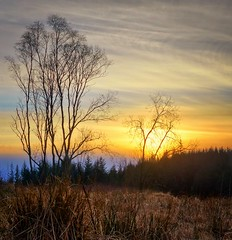 Tuastad, Norway (Vest der ute) Tags: trees sunset norway rogaland fav25 g7x ryksund
