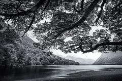Lake Te Anau. (Bill Thoo) Tags: laketeanau teanau newzealand southisland wilderness lake trees hills travel landscape monochrome blackandwhite sony a900 alpha900 2470mm