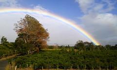 La mejor del arcoiris/ The best one from the Rainbow (vantcj1) Tags: cafetal nubes arcoiris naturaleza vegetacin paisaje rbol serenidad cableado campo