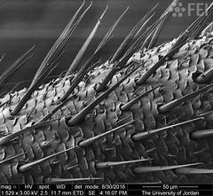 Antena (FEI Company) Tags: fei microscopy nanotechnology nanoimage magnification feiimagecontest inspect mineralsandmining geosciences