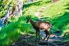 DSC_9543 (Costi Jacky) Tags: france naturereserve parcdemerlet