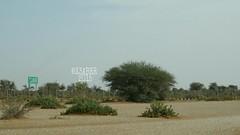 # # #hdr #colorful #nature #green #trees #plant # # # # # #photo  # # # #ksa #saudiArabia # #_ (photography AbdullahAlSaeed) Tags: trees plant green nature photo colorful saudiarabia hdr   ksa