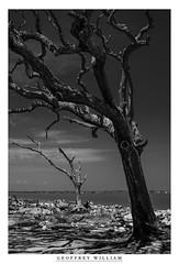 Jekyll Isle (Geoff Sills) Tags: wood shadow bw white black beach nature composition contrast ga georgia island 50mm nikon geoff south william creepy geoffrey isle depth jekyll drift sills 18g d700