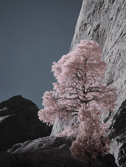 I R Pink (blasingameliz) Tags: tree ir rocks arches moab channelswapping