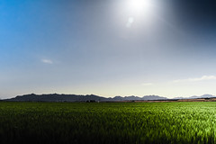 crops (rp85364) Tags: green field barley farm wheat wide grow farmland fields farms crops d7200