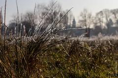 Brandenburg - morgens am Dahme-Umflut-Kanal