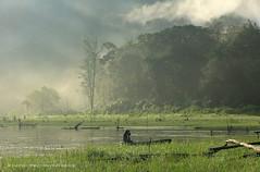 Danau Tamblingan (Hartati Setiawan) Tags: morning bali lake indonesia foggy tamblingan