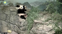 2016_07-20k (gkoo19681) Tags: nationalzoo stealing meixiang beibei yummyapple ccncby