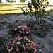 160726-flowers-bed-houses-neighborhood.jpg