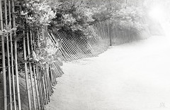 dreamy beach in B/W (marianna_a.) Tags: fence friday hff wooden boards parallel lines sandy beach oak trees bw blackandwhite monochrome mariannaarmata lensflare light perspective