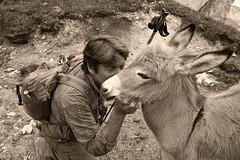 Friends (Franco Vannini) Tags: dolomiti dolomites odles sassrigais fermeda seceda valgardena valdifunes odle pieralongia somarello donkey asinello