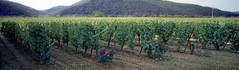 10 Chteau du Cayrou vineyard 05.09 (Clementinos2009) Tags: cahors chteauducayrou