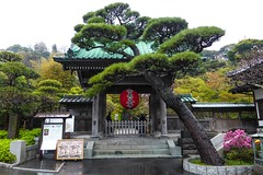 Hase-dera IV (Douguerreotype) Tags: shrine temple buddhist kamakura japan red tree garden green gate lantern steps rain