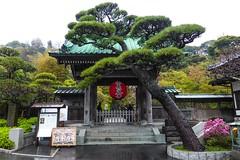 Hase-dera IV (Douguerreotype) Tags: shrine temple buddhist kamakura japan red tree garden green gate lantern steps rain
