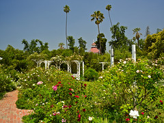 The Rose Garden (nebulous 1) Tags: flowers roses nature palms nikon sunny clear losangelesarboretum heirloomroses queenannecottage therosegarden luckybaldwin nebulous1 glene