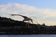 012820 - Gaviota (M.Peinado) Tags: gaviota gaviotas ave aves animal animales fauna puerto puertodebarcelona barcelona provinciadebarcelona catalua espaa spain 17062016 juniode2016 2016 canoneos60d canon copyright