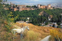 L'Alhambra et Granada depuis la colline de l'Ermita de San Miguel Alto, Granada, Andalucia, Espana (claude lina) Tags: claudelina espana spain espagne andalucia andalousie granada grenade ville town albayzin alhambra vue view paysage landscape