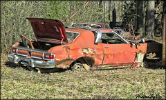 Ford Torino (Photos By Vic) Tags: ford torino rusty rust junkyard northcarolina nc classic car vehicle automobile