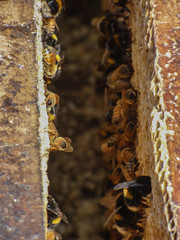 A Hive of Activity (Steve Taylor (Photography)) Tags: hive bee honey comb insect closeup newzealand nz southisland canterbury bankspeninsula littleriver