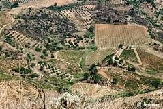 campi (desertar) Tags: segesta calatafimi sicilia trapani tempio elimi elleni