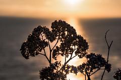 _DO14885 (Edoardo Marino) Tags: palos pv palosverdes san pedro california sunset park ocean sun light outdoor shoot people silhouette tamron tamron85 85mm nikon nikkor 20mm wideangle lightroom edoardomarino marinoedoardo dodi d810 birds sky clouds beauty colors