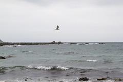 Pase a la playa de Kirpi (mariovilches) Tags: hedgehog erizodetierra kirpi playa algarrobo chile