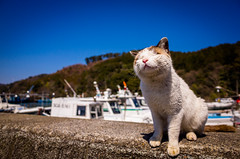 feeling the warmth (Horikiri port, Shiga) (Marser) Tags: japan port cat raw gr  ricohgr shiga  lightroom  grd