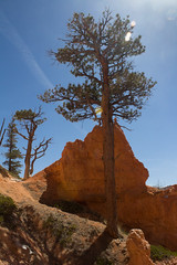 Bryce Canyon National Park (Nancy Asquith) Tags: landscape utah canyon bryce brycecanyon brycecanyonnationalpark usnationalparks southwestuslandscape