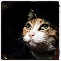 a heartbreaking and unexpected farewell (*Starbuck*) Tags: portrait love loss cat death tabby calico rememberance fatcat eulogy blindcat caliby