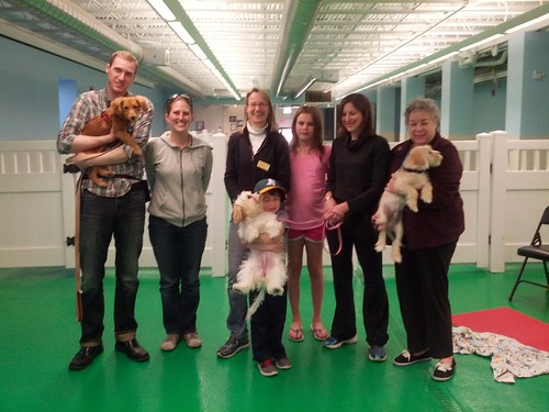 """Puppy Head Start, Session D, Spring 2015-Tues; Class photo-02 • <a style=""""font-size:0.8em;"""" href=""""http://www.flickr.com/photos/65918608@N08/17708487962/"""" target=""""_blank"""">View on Flickr</a>"""