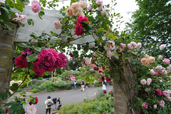 20150523-DS7_0752.jpg (d3_plus) Tags: street bridge sea sky plant flower building nature japan garden walking spring scenery bokeh outdoor fine wideangle daily architectural bloom  streetphoto   shizuoka    dailyphoto  izu  atami thesedays superwideangle    fineday      tamron1735   a05    tamronspaf1735mmf284dildasphericalif  tamronspaf1735mmf284dildaspherical architecturalstructure d700    nikond700 tamronspaf1735mmf284dild tamronspaf1735mmf284  nikonfxshowcase