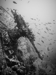 gun of the Thistlegorm (ChristianStork) Tags: blackwhite egypt scuba diving olympus wreck ägypten thistlegorm c1 wrack tauchen rotesmeer schwarzweis captureone reasea wracktauchen epl5 mzuiko1442f3556iir