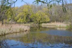 2015 Pond (DrLensCap) Tags: park chicago robert nature water colors illinois spring pond village north center il kramer