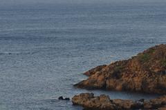 20160703-DS7_8643.jpg (d3_plus) Tags: street sea sky fish plant flower nature japan port drive nikon scenery underwater diving snorkeling telephoto bloom  tele watersports nikkor   marinesports shizuoka   touring  apnea izu    80200mm 80200     fishingport skindiving   8020028 80200mmf28d minamiizu  80200mmf28      80200mmf28af   nikon1 d700 nikond700   aiafzoomnikkor80200mmf28sed