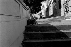 pee on your dee (all the bulbs are spent...) Tags: bayarea california chilling dog kodaktrix400 lazy leicam6 sanfrancisco staircase stairs stairway stairwell street streetphotography vallejostreet voigtlndernoktonclassic35mmf14