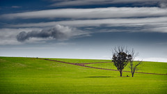 Country road with tree (RWYoung Images) Tags: road tree rural canon fence landscape australia southaustralia paddock burra rwyoung 5d3