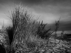 _7250501-Editar (josem_alvarez25) Tags: playa banco y negro mar caseta palmeras olympus omd em10