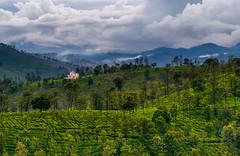 Home with a Green Carpet (rajaramki) Tags: coonoor india tamilnadu teaestate
