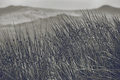 The high moor, Dartmoor (Sean Hartwell Photography) Tags: dartmoor devon moors nationalpark grass upland wild hills england westcountry canon760d canon18200mm monochrome desolate