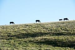 horses (ed_ro83) Tags: hiking trecking montagne montagna sibillini forcaviola capannaghezzi castelluccio umbria italia italy