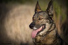 Los viernes al sol (Sobrino de Murphy) Tags: perros dogs chiens canne gos animal planet tierra